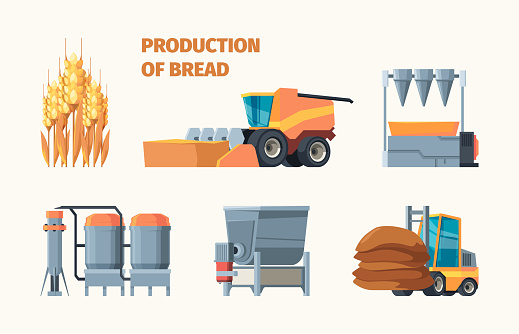 Wheat harvesting. Bread production bakery industry tasty food from grain seeds farm machines and retail markets garish vector flat infographic