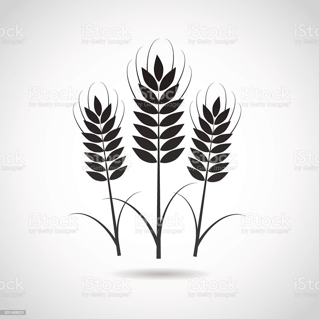 Wheat icon isolated on white background. vector art illustration