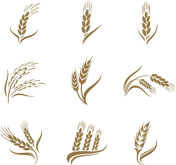 Wheat icon set Wheat icon set cereal plant stock illustrations