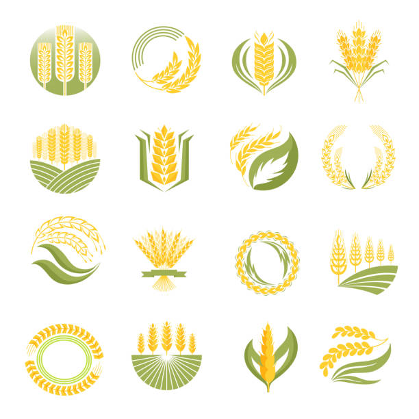Wheat icon vector set. Cereal ears and grains set for agriculture industry or logo design. Vector food illustration organic natural wheat logo icon. Healthy bread wheat logo icon organic natural agriculture label. corn crop stock illustrations