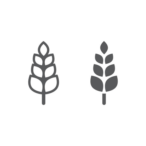 ilustrações de stock, clip art, desenhos animados e ícones de wheat line and glyph icon, agriculture and farm, grain sign, vector graphics, a linear pattern on a white background. - oats