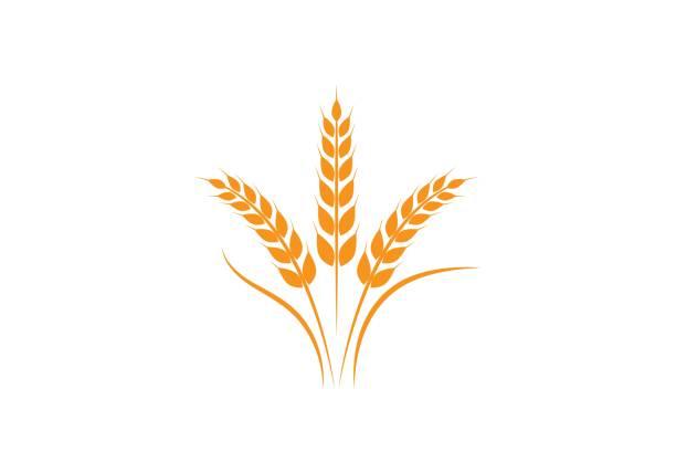 buğday logo şablonu - buğday stock illustrations