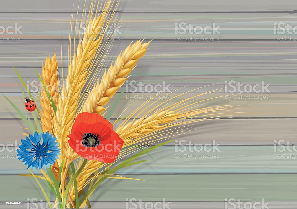 Wheat oat barley with cornflower poppy and ladybug wooden wall vector art illustration