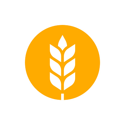 Wheat or barley outline icon. Grain symbol. Vector illustration.