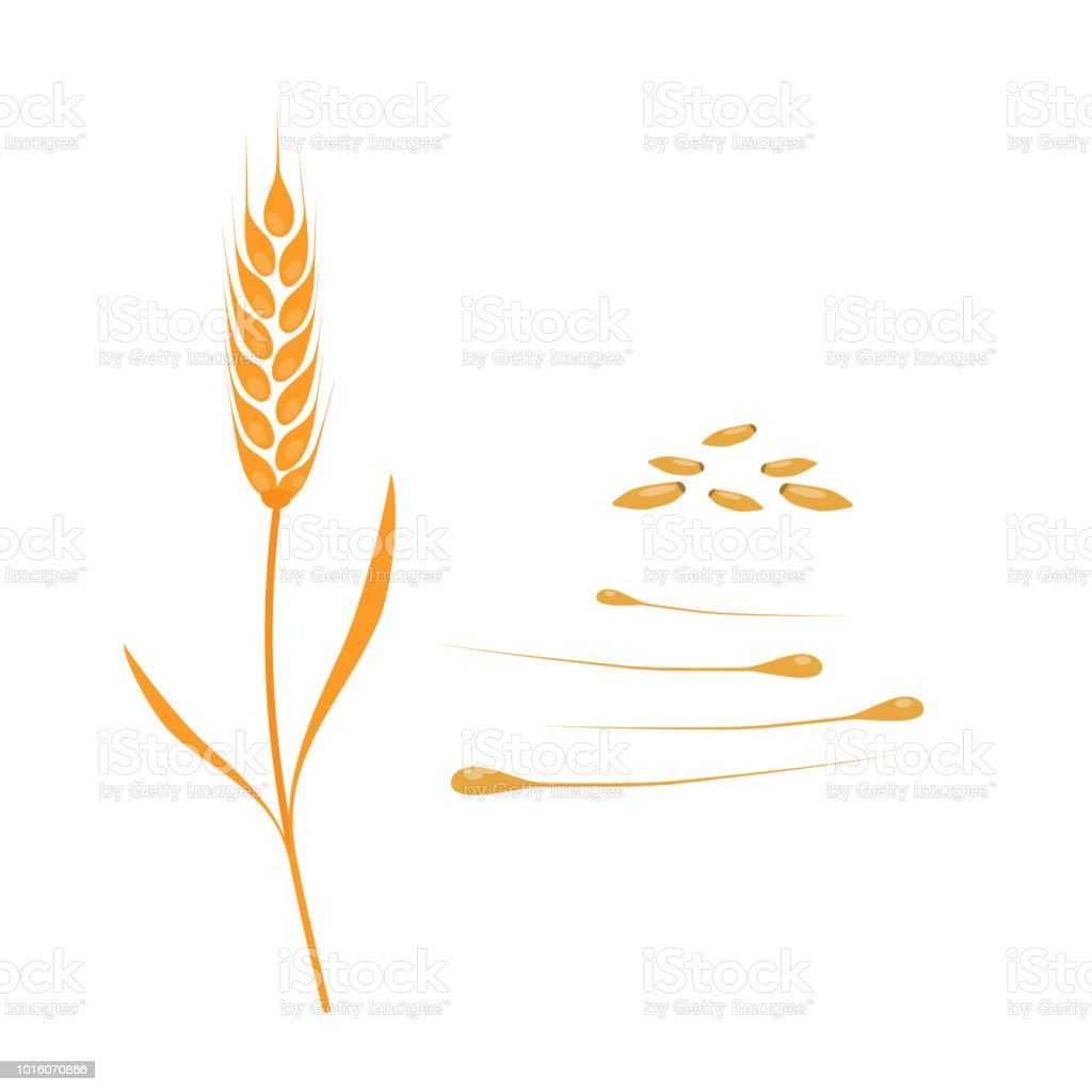 Ears Of Corn Grain Wheat Leaves Yellow Autumn Hd Wallpaper