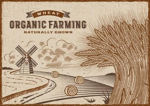 ilustraciones, imágenes clip art, dibujos animados e iconos de stock de paisaje de agricultura ecológica de trigo - straw field