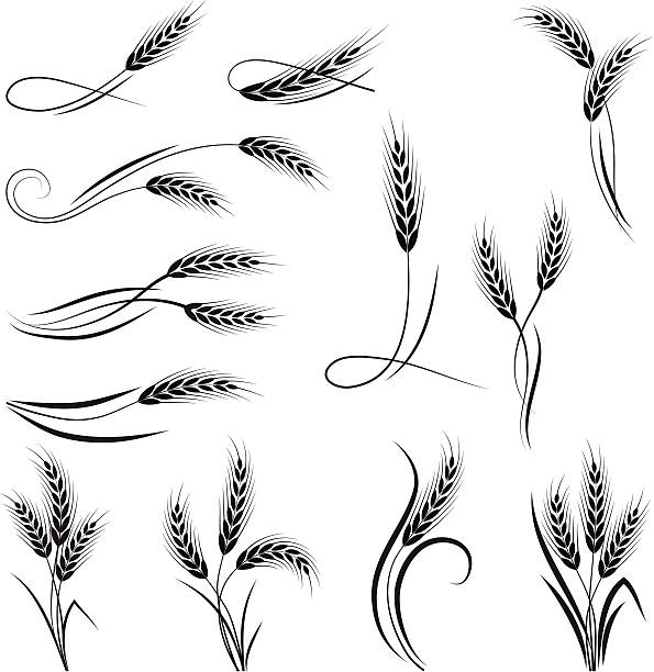 wheat ornament - buğday stock illustrations