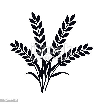A bunch of wheat or barley plant ears vector illustration.