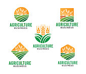 wheat plant vector logo design and illustration of agriculture business, crop harvest, flour production and symbol of staple food quality