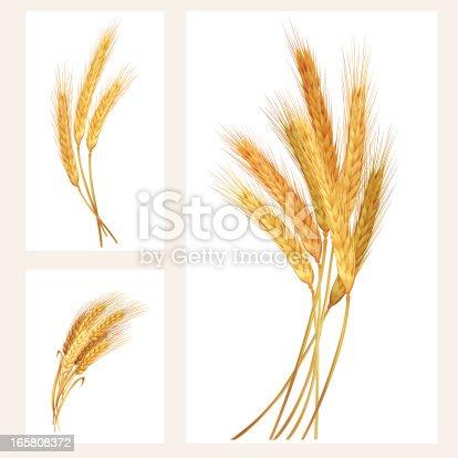 istock Wheat set 165808372