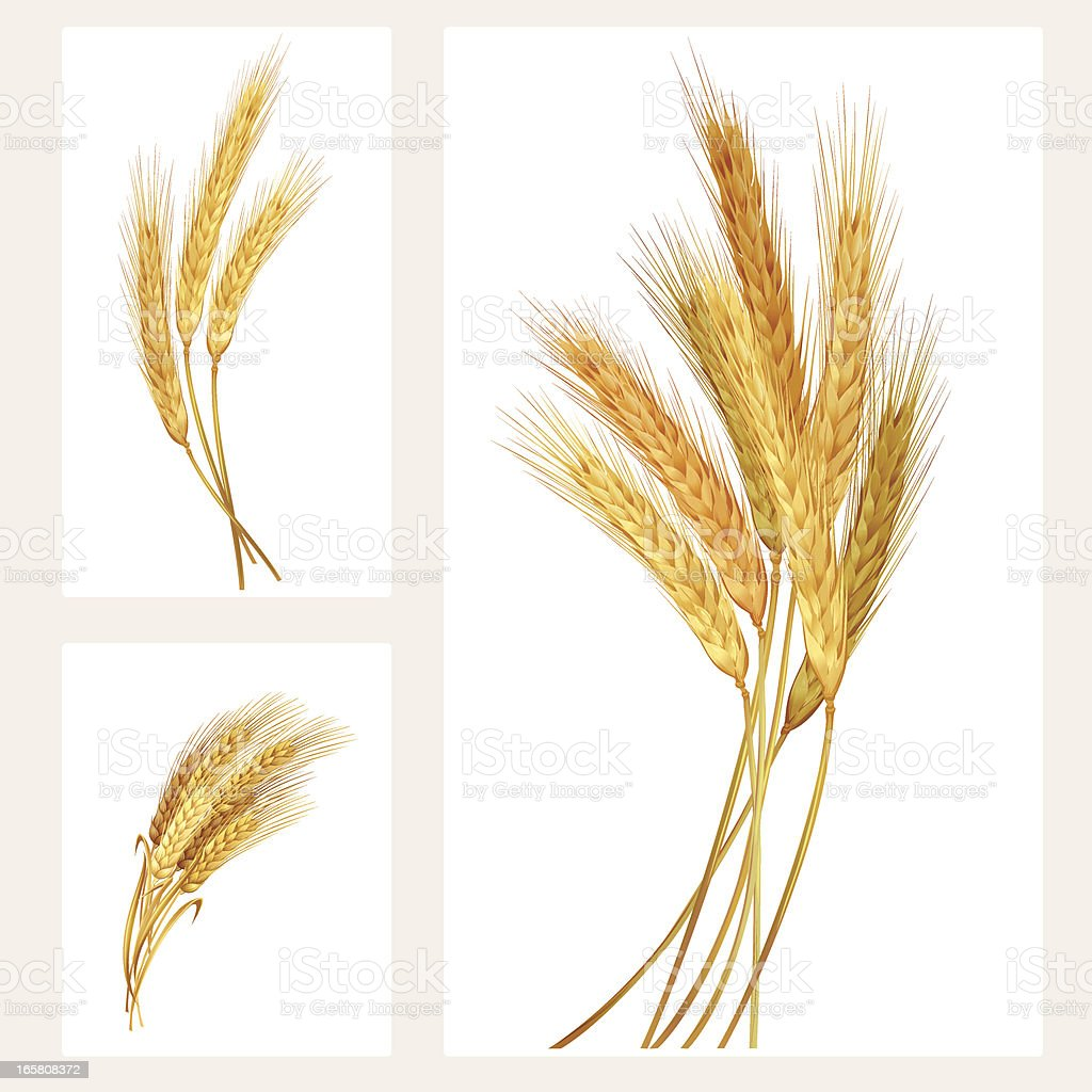 Wheat set vector art illustration