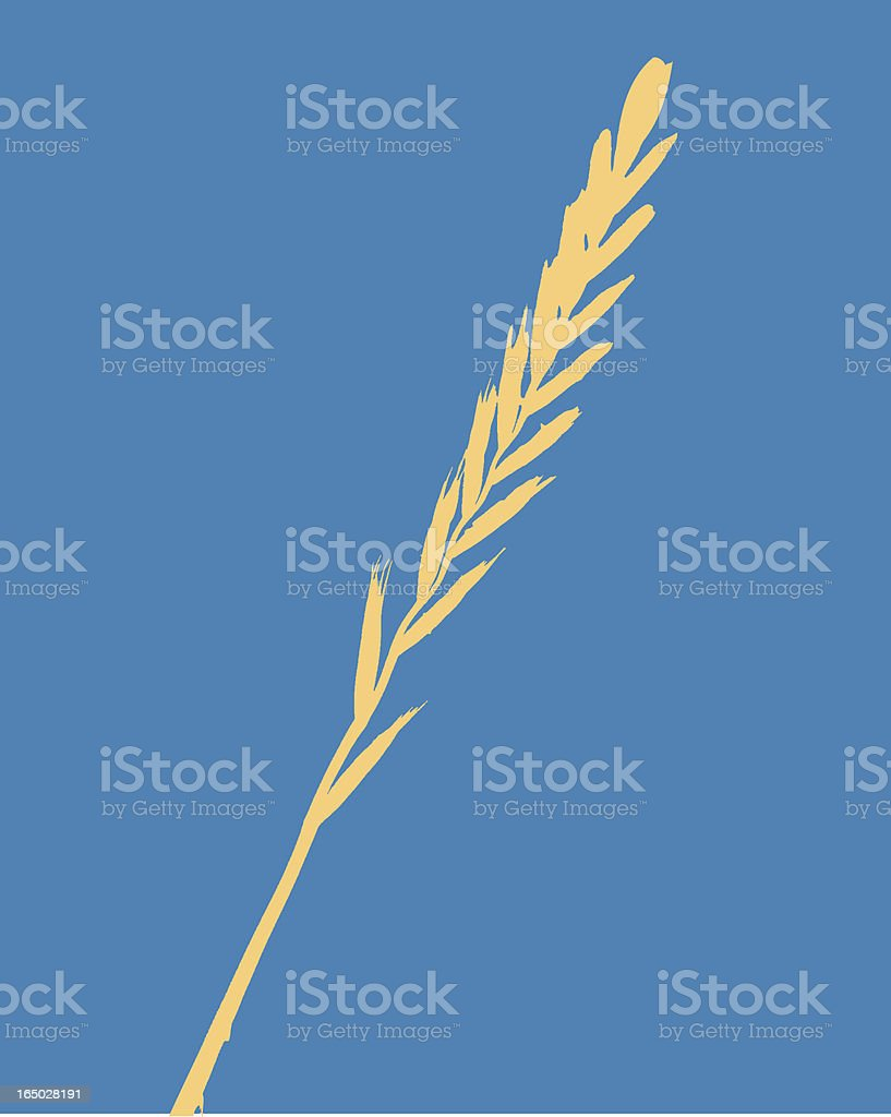 Wheat Stalk (Vector) royalty-free stock vector art