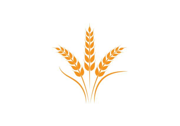 wheat   Template Agriculture wheat   Template vector icon design wheat stock illustrations