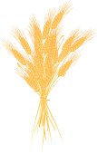 Illustration of a bunch of wheat tied together.