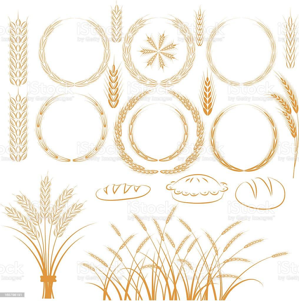 Wheat vector art illustration