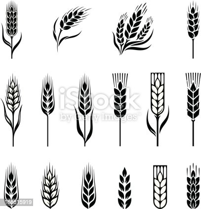 Wheat. A set of design elements. Download includes:  Illustrator CS, CorelDraw (version 9.0), 8EPS and Hi-res JPG file
