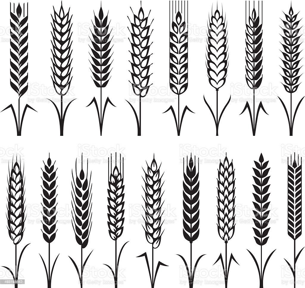 Wheat Stock Illustration - Download Image Now - iStock