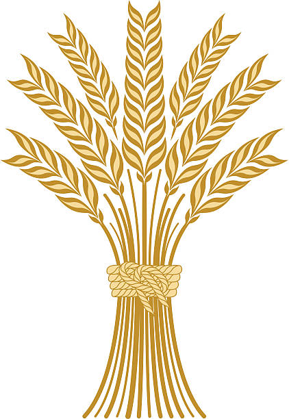 Wheat  bundle stock illustrations