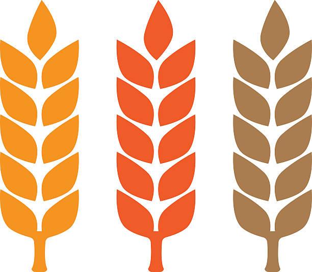 wheat yellow gluten free grain - gluten stock-grafiken, -clipart, -cartoons und -symbole