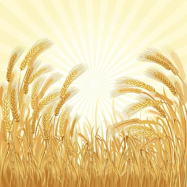 dem wheatfield - dinkelbrot stock-grafiken, -clipart, -cartoons und -symbole