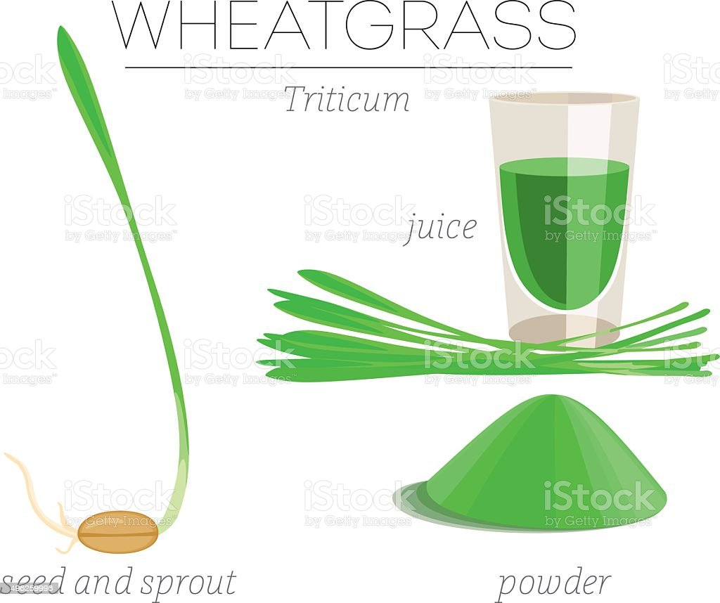 Wheatgrass vector art illustration