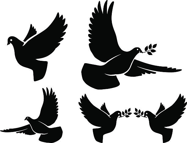 Dove silhouettes Dove silhouettes. Vector flying dove with olive branch black silhouettes on white background pigeon stock illustrations