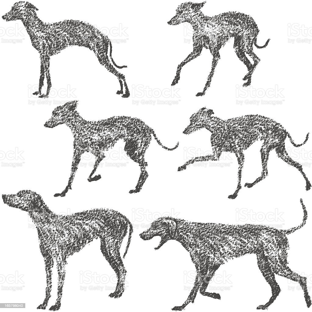 Whippet and Dalmatian royalty-free whippet and dalmatian stock vector art & more images of animal