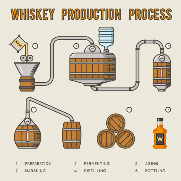 whiskey production process. distillation and aging whisky infographics - destillieren stock-grafiken, -clipart, -cartoons und -symbole