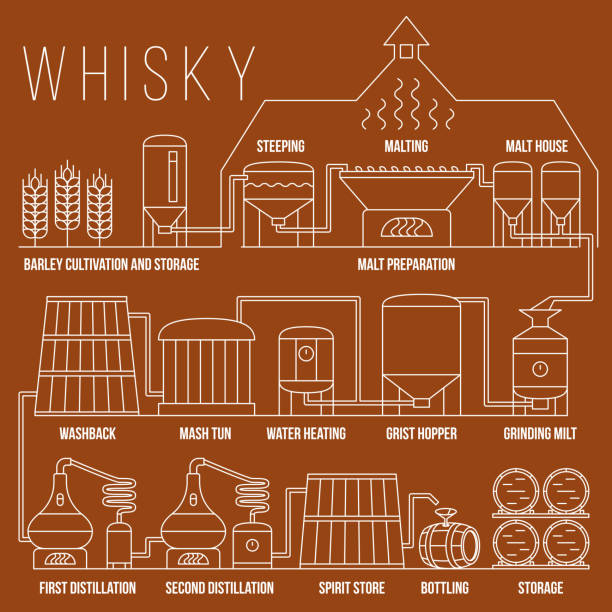 whiskey production process vector infographic template - destillieren stock-grafiken, -clipart, -cartoons und -symbole