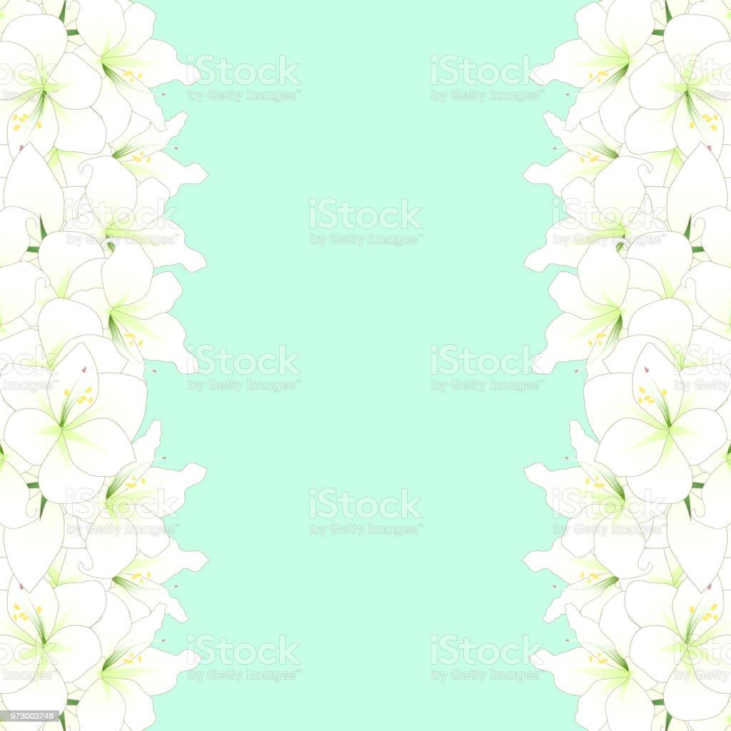 White Amaryllis Border Hippeastrum Christmas Flower Stock Vector Art