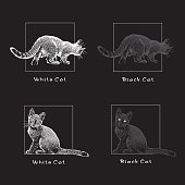 White and black cats on a black background.