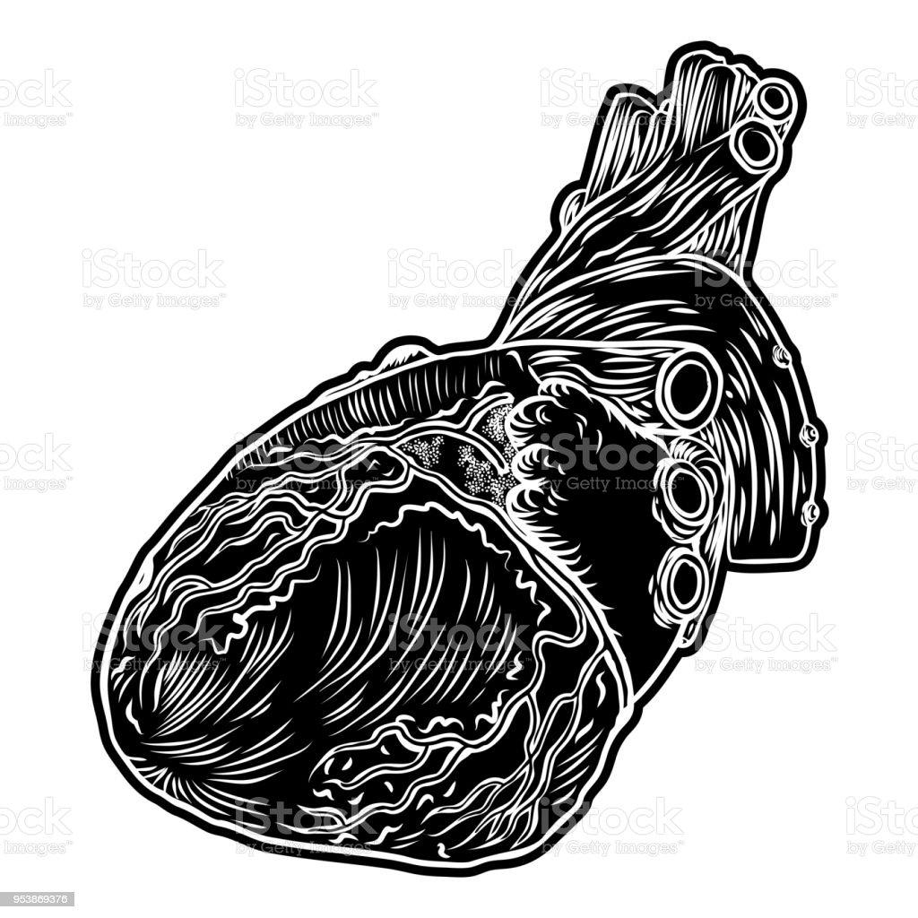 Weiß Und Schwarz Menschliche Herz In Der Hand Gezeichnete Stil ...