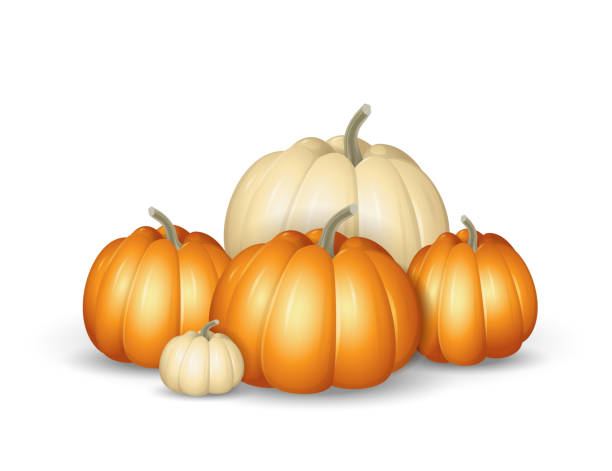 white and orange pumpkins - cartoon vector illustration isolated on white background - pumpkin stock illustrations