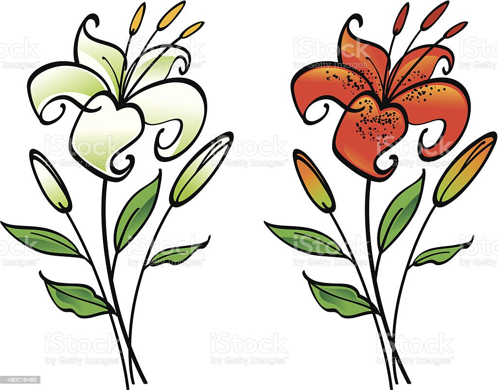 royalty free tiger lily clip art vector images illustrations istock rh istockphoto com easter lily clipart black and white lily clipart images