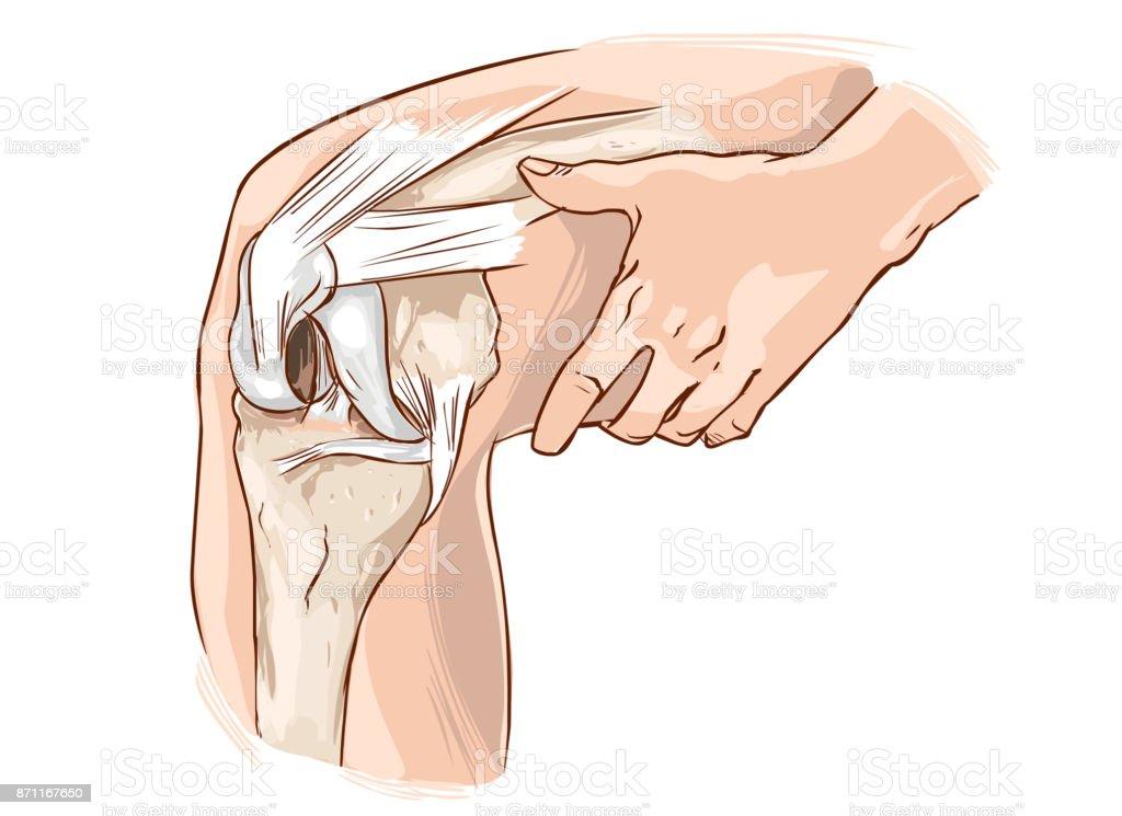 white background vector illustration of a knee vector art illustration