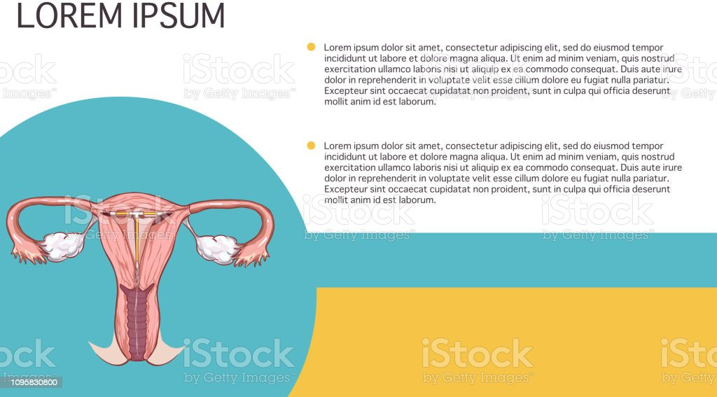 white background vector illustration of a Vagina anatomy