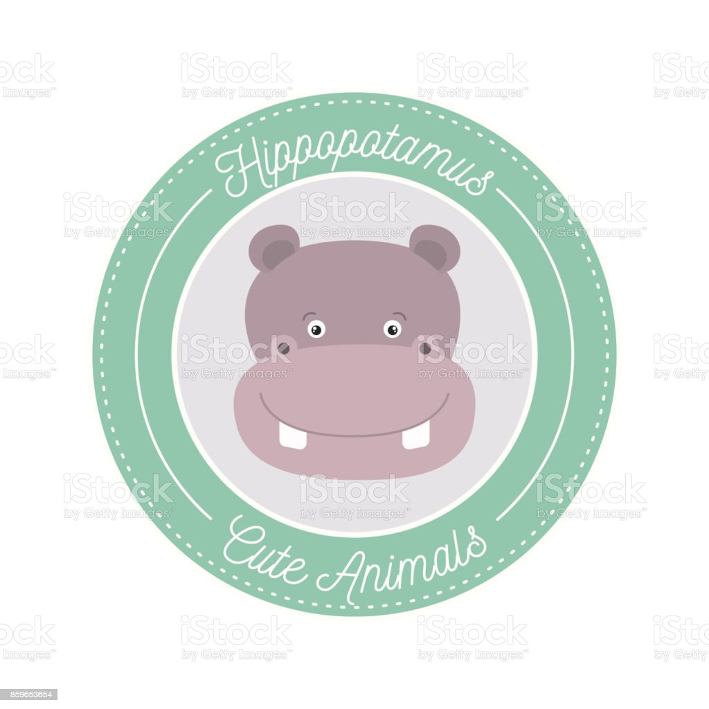 White Background With Color Frame Decorative And Face Hippopotamus ...