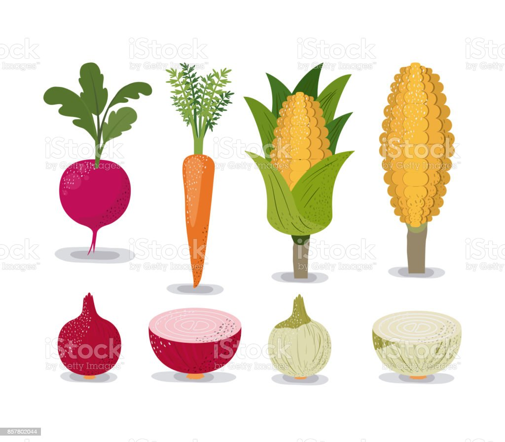 white background with colorful set of vegetables beet onion carrot and corn vector art illustration