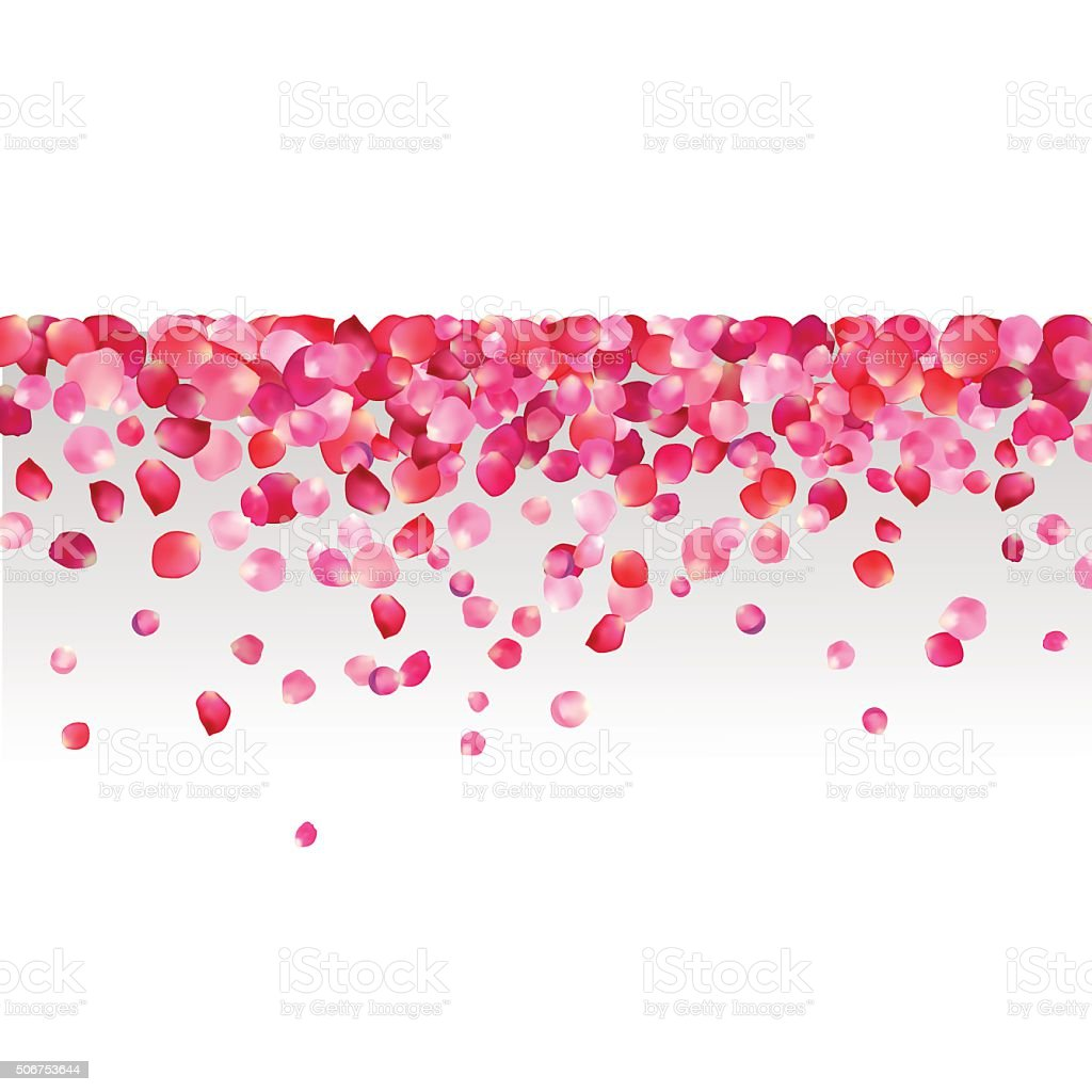 Sfondo Bianco E Rosa Petali Di Rosa Immagini Vettoriali Stock E