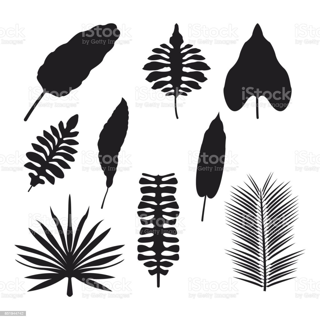 White Background With Set Brown Color Types Of Tropical Leaves Stock Illustration Download Image Now Istock Just one of millions of high quality products available. white background with set brown color types of tropical leaves stock illustration download image now istock