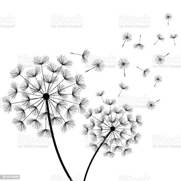 White background with two stylized black dandelions vector id824816888?b=1&k=6&m=824816888&s=612x612&h=tifk1to9wl pyzvgx761kjprh6wkfacxy3nqtsiyu18=