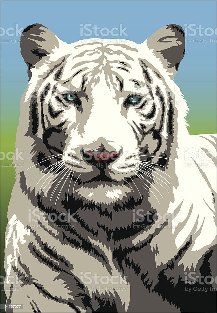 White Bengal Tiger royalty-free white bengal tiger stock vector art & more images of albino