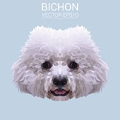 White Bichon Frise dog animal low poly design. Triangle vector illustration.