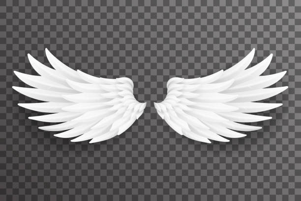 illustrazioni stock, clip art, cartoni animati e icone di tendenza di white bird angel fly wings 3d realistic design transparent background vector illustration - piume colorate