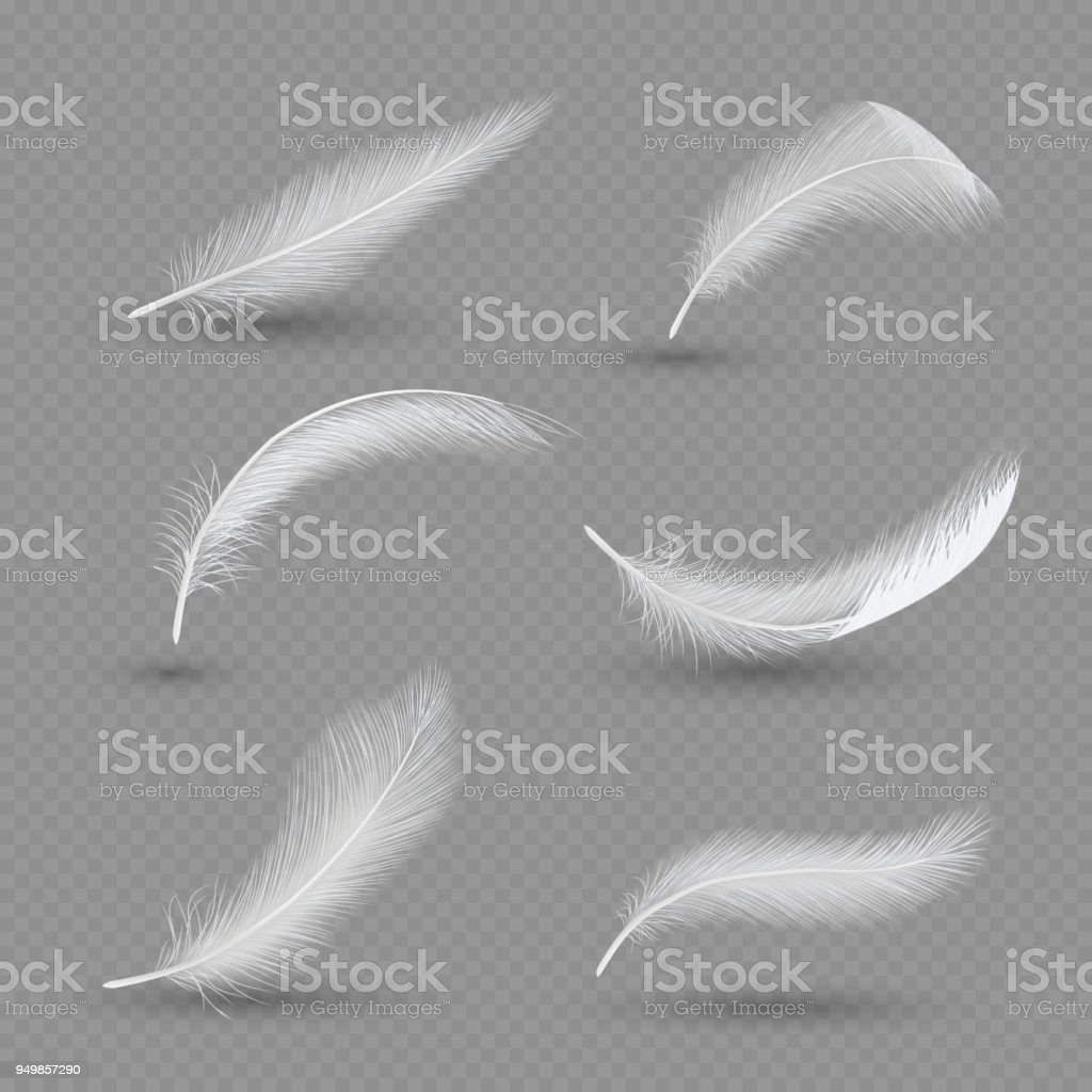 White birds feather icon set, vector realistic illustration