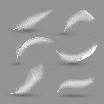 White birds feather icon set, vector realistic illustration
