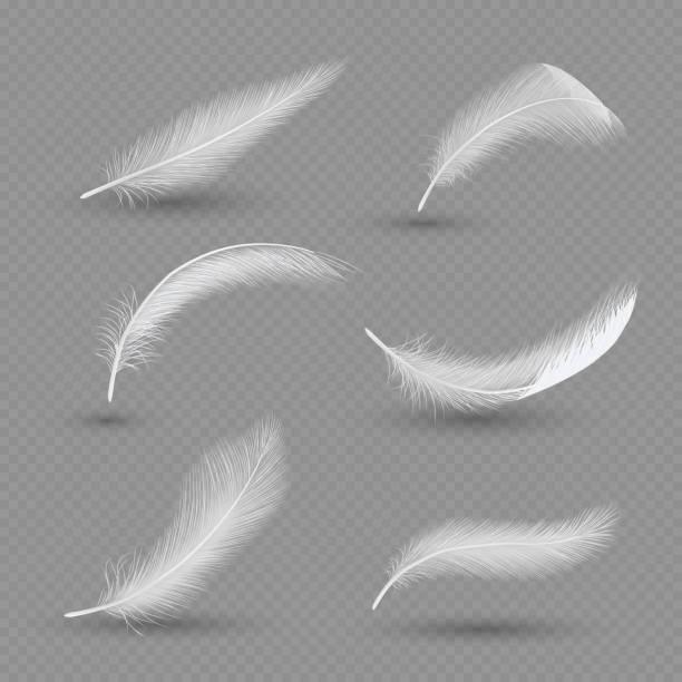 zestaw ikon piór białych ptaków, wektorowa realistyczna ilustracja - pióro przyrząd do pisania stock illustrations