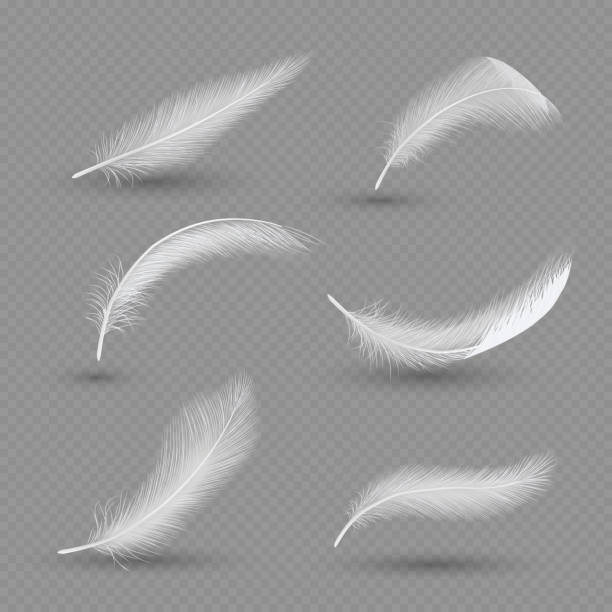illustrazioni stock, clip art, cartoni animati e icone di tendenza di white birds feather icon set, vector realistic illustration - piume colorate