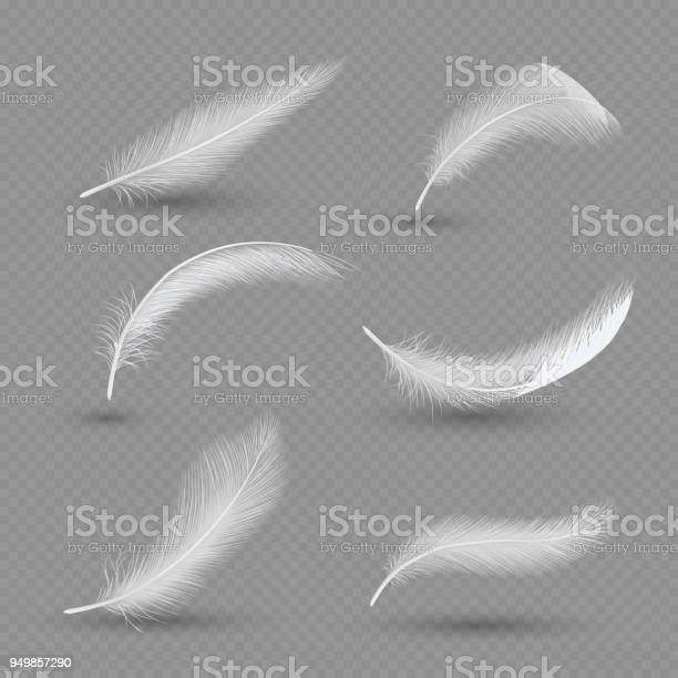 White birds feather icon set. Vector realistic illustration isolated on transparent background.
