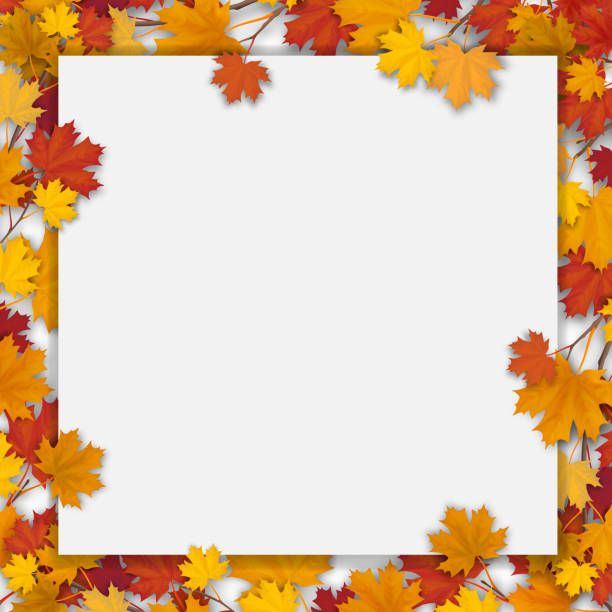 White blank with autumn maple leaves White paper sheet and fallen colorful maple leaves. Vector autumn background. fall background stock illustrations